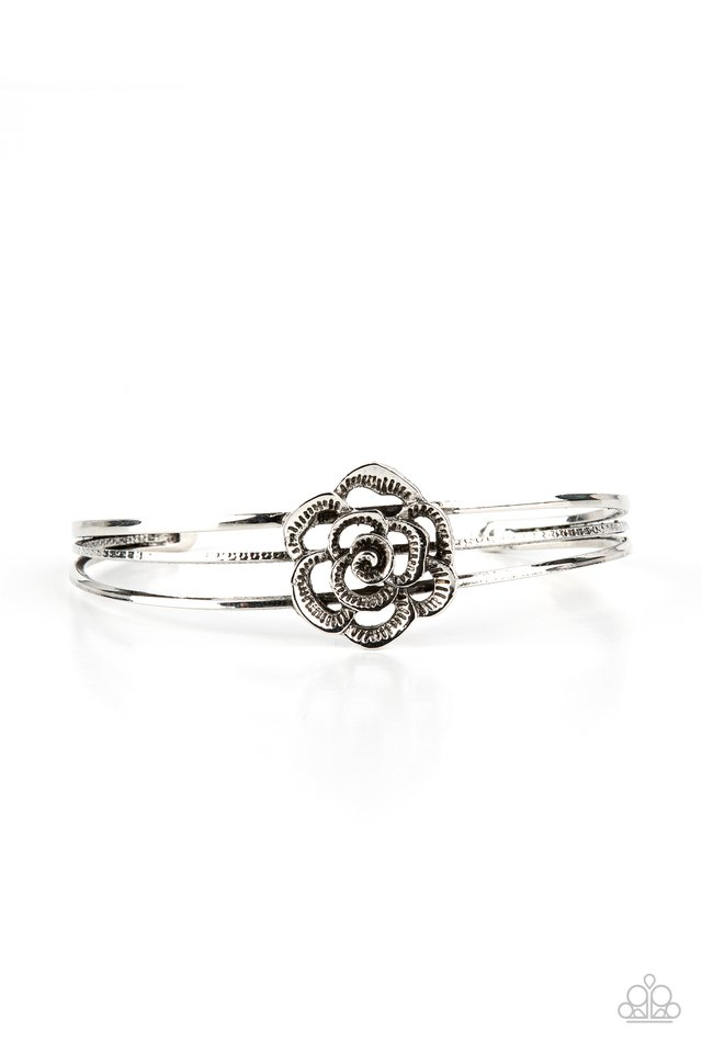 Rosy Repose - Silver - Paparazzi Bracelet Image